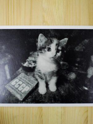 Postcard. Dmitriy Konstantinov
